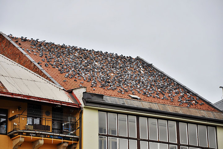 A2B Pest Control are able to install spikes to deter birds from roofs in Sands End.