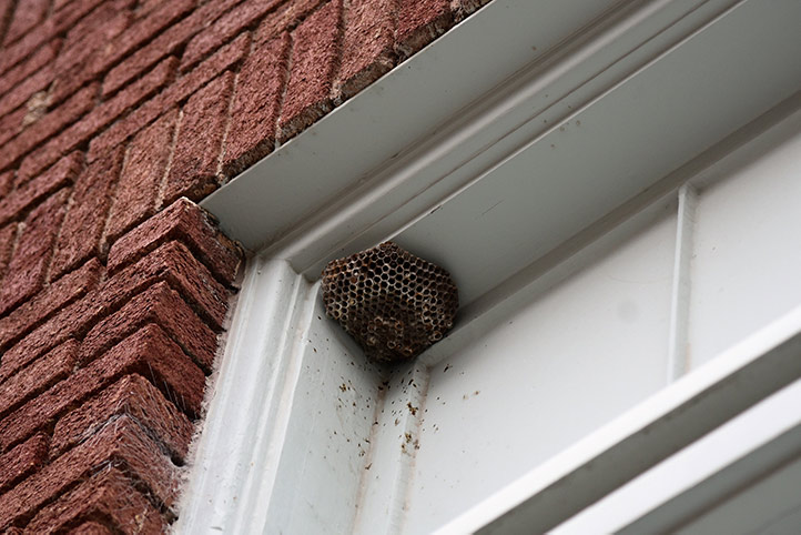 We provide a wasp nest removal service for domestic and commercial properties in Sands End.